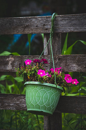 flower pot hanging on a fence