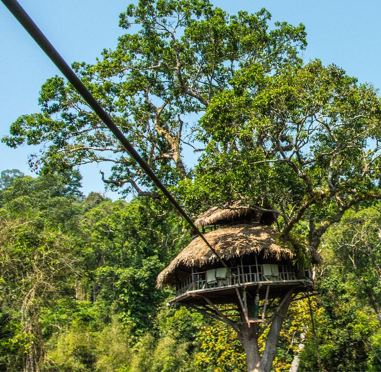 Treehouse with Zipline