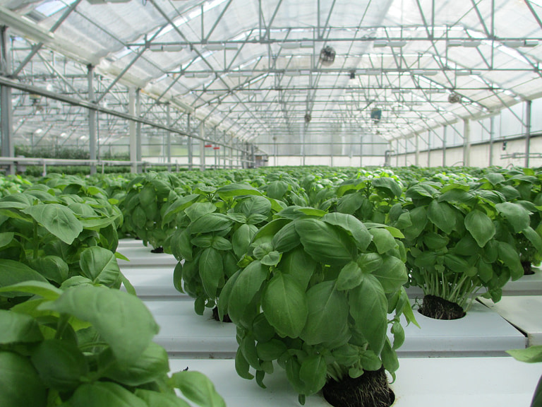 Herb Greenhouse