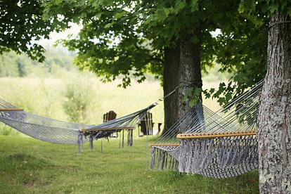 hammocks in backyard
