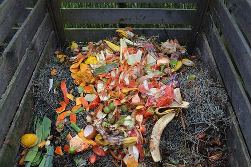 Green waste in compost bin