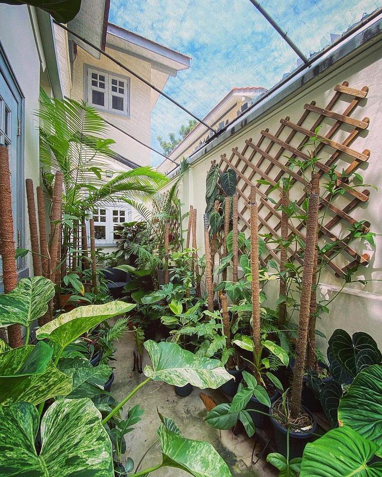 Walkway through garden