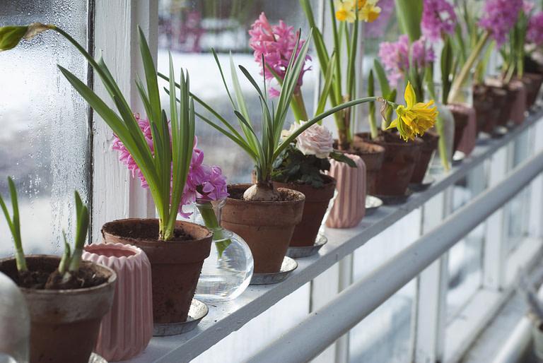 Flower pots on a railing