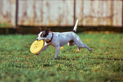 Puppy with frisbee