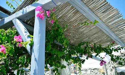 garden shade filled with flowers