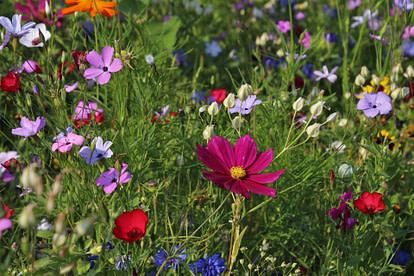 wild flowers in backyard
