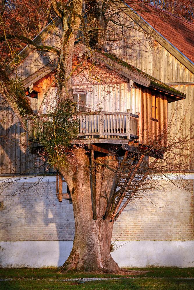 Log cabin treehouse