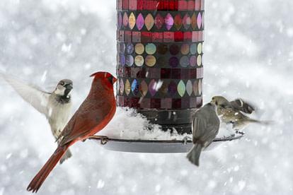 birds in a bir feeder in winter