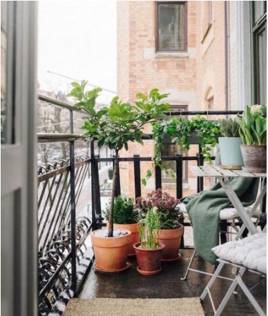Flower pots on balcony