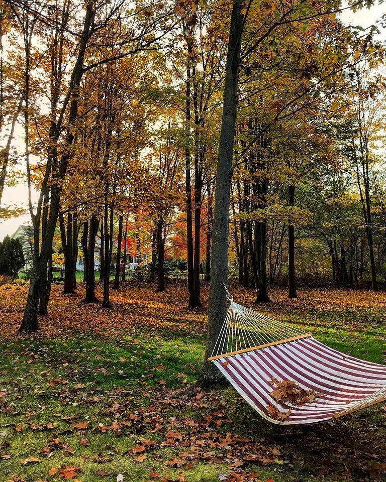 Hammock between trees