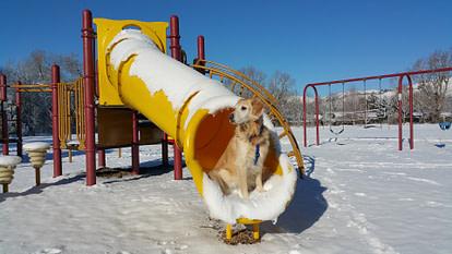 Dog in a slide