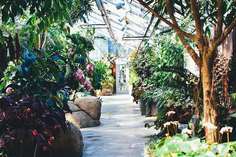 Fruit Tree Greenhouse