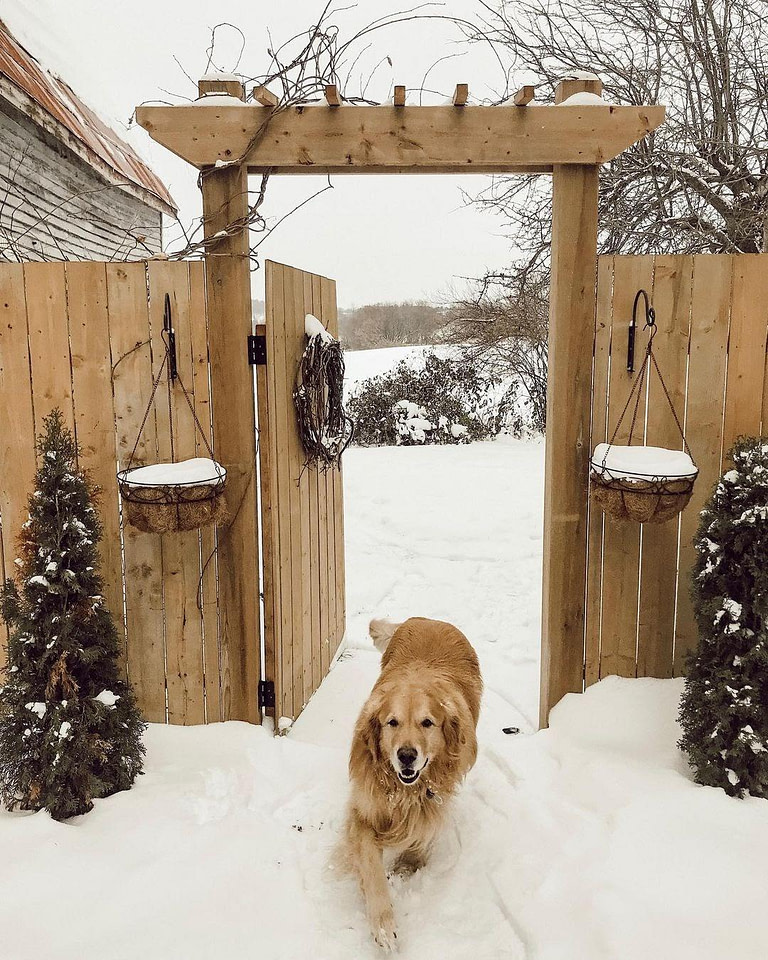 Dog runing through a gate in snow