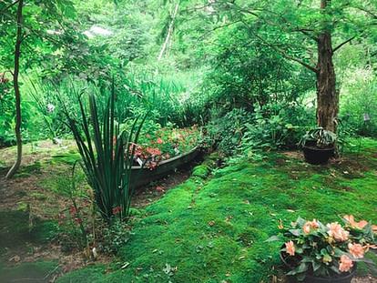 wet climate garden