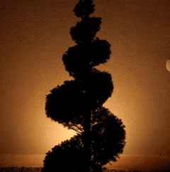 Tree lit by spotlight