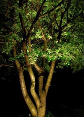 Spotlight on a tree